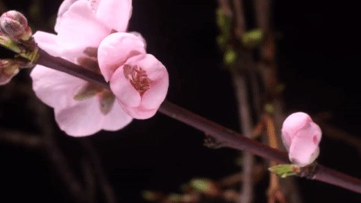 Flowers GIFs. Beautiful Bouquets, Blossoming Buds