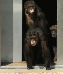 Hugs of Monkeys on GIFs. 18 Cute Animated Images