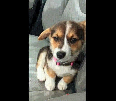 Sleepy Puppies GIFs. 60 Cutest Animated Images For Free