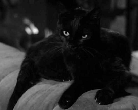 Black Cats on GIFs. 130 Animated Images of Cats With Black Fur