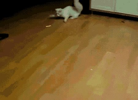 Cat Attack GIFs. 100 Animated Images of Funny Fighting Cats