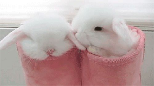 Cute Bunnies Gifs 105 Animated Gif Images For Free