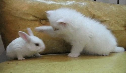 Cute Bunnies GIFs. 105 Animated GIF Images for Free