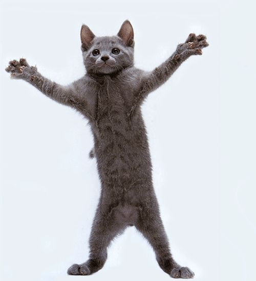 Dancing Cats Gifs 65 Funny Animated Images For Free