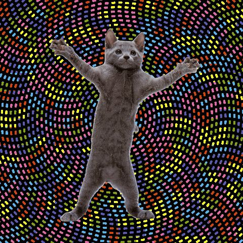 Dancing Cats GIFs. 65 Funny Animated Images for Free