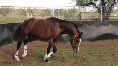 Beautiful Horses on GIFs. Galloping Stallions. Over 130 GIF Animations