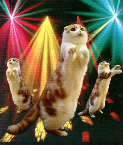 Happy Cat GIFs. 35 Animated Images of Cats in Joy