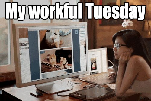 Happy Tuesday GIFs. 123 Funny Animated Pics with Wishes