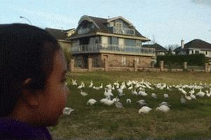 Look at all those chickens GIFs. 12 Animated Images From That Video