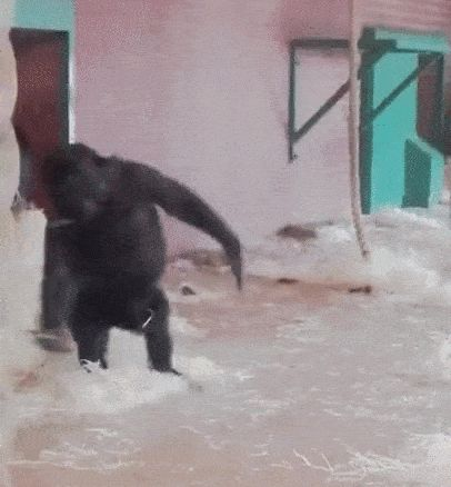 Funny Animals GIFs. 150 Animated Pics to Have Some Fun