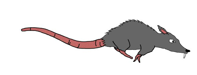 Rats on GIFs. 80 Animated Images of These Rodents