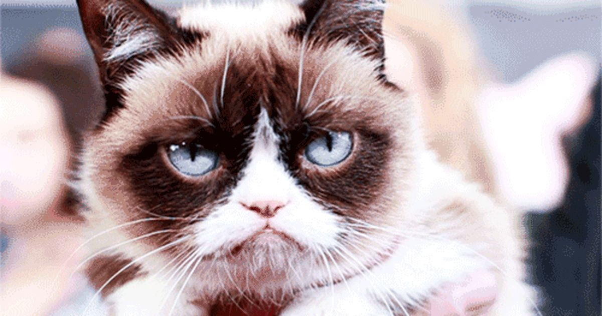 Sad Cats on GIFs. 90 Animated Sorrowful Pussies