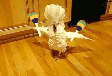 Party Parrot GIFs