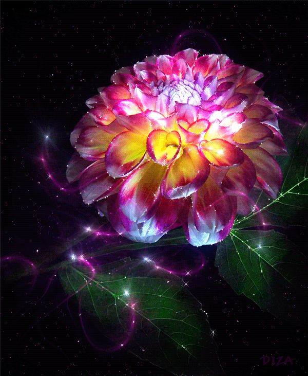 GIFs Flowers. Beautiful Bouquets, Blossoming Buds