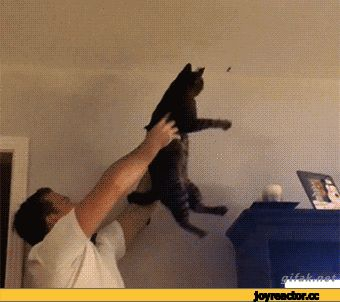 Funny Cats GIFs. Really Large Collection of Animated Pics