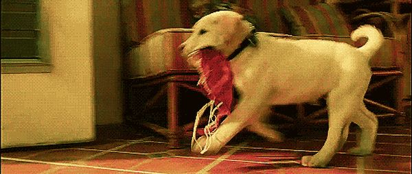 Funny Dogs GIFs. 112 Pieces of Moving Pictures