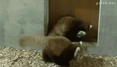 Funny Fights on GIFs. Over 110 Pieces of Cool Animated Image for Free