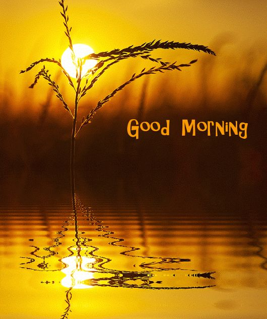 Royalty Free Good Morning Images With Nature Gif