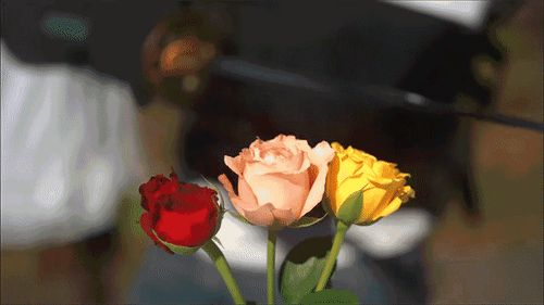 GIFs of Roses. Beautiful Bouquets of Different Colors. 60 pieces